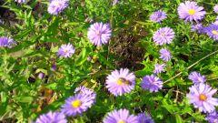 jesienny pyłek