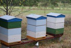 Karmienie pszczół 003