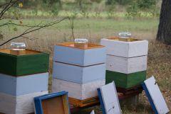 Karmienie pszczół 001