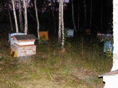 Stare Ule Dadanta Wciąż w nich Pszczółki brykają.