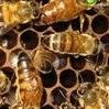 Koszulki dla pszczelarzy - ostatni post przez kri